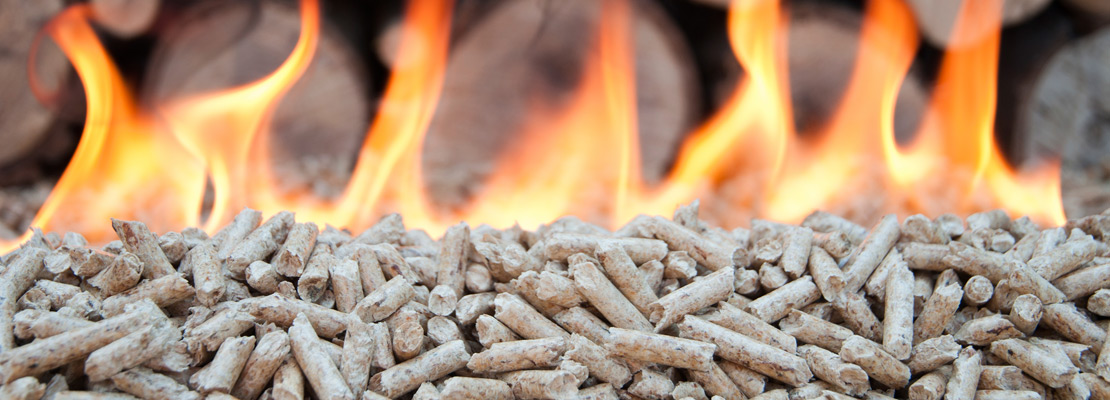 Biomass Wood Fuel